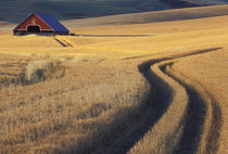 NA, USA, Idaho, south of Moscow Roadway through wheat to barn by Danita Delimont