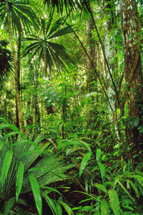 Lowland rainforest, Tambopata National Reserve, Peru by Danita Delimont