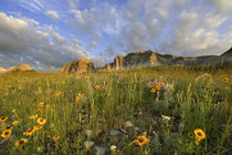 Prairie Wildflowers in Many Glacier Valley at Glacier National Park in Montana by Danita Delimont
