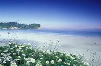 N.A, USA, Washington, Olympic Nat'l Park Daisies along Crescent Beach von Danita Delimont