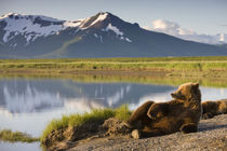 'Grizzly Bear, Katmai National Park, Alaska' by Danita Delimont