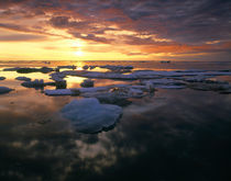 Canada, Yukon, Ivvavik NP, Summer pack ice at sunset on the Arctic Ocean by Danita Delimont