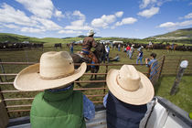 Young boys take Hughes Ranch branding near Stanford Montana model released by Danita Delimont
