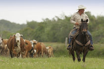 Mike Campbell returning with cows, Seadrift, TX by Danita Delimont