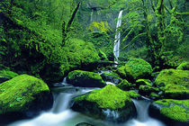 USA, Oregon, Columbia River Gorge National Scenic Area by Danita Delimont