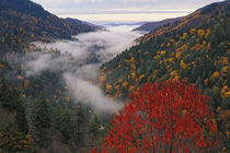Autumn view of fog from Morton Overlook by Danita Delimont