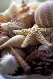'Shellfish details' by Danita Delimont