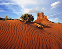 USA, Utah, Monument Valley von Danita Delimont