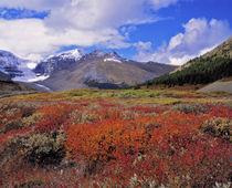 Canada, Alberta, Banff NP by Danita Delimont