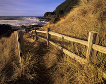 OR, Oregon Coast, Yachats, Neptune Bay and trail to beach by Danita Delimont