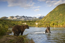 Grizzly Bear Sow and Cub, Katmai National Park, Alaska by Danita Delimont
