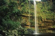 Mexico, Chiapas, Misol Ha waterfall. von Danita Delimont