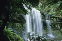 Tasmania, Mt. Field National Park, Russell Falls and tree ferns. von Danita Delimont