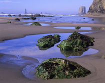 WA, Olympic National Park, Second Beach, Tidepools & Seastacks von Danita Delimont