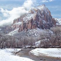 USA, Utah, Zion NP by Danita Delimont