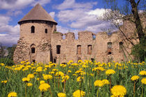 Dandelions surround Cesis Castle in central Latvia. by Danita Delimont