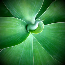 Agave by Gary Hunt