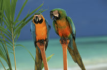 North America, USA, Hawaii. Parrots by Danita Delimont