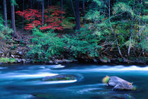 NA, USA, Oregon, Fall Foliage on North Umpquah River by Danita Delimont