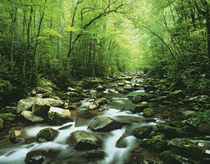 USA, North Carolina, Great Smoky Mountains National Park von Danita Delimont