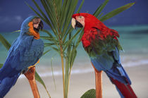 North America, USA, Hawaii. Parrots on palm by Danita Delimont