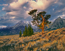 USA, Wyoming, Grand Teton NP von Danita Delimont