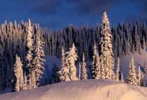 NA, USA, Washington, Mt. Rainier NP Winterscape by Danita Delimont