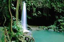 Caribbean, Island of Dominica (aka Nature Island), Trois Piton National Park von Danita Delimont