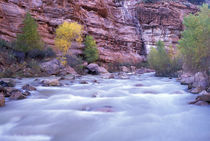 North America, USA, UT, Zion NP Virgin River at the honeycomb rocks area Fall by Danita Delimont