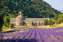 France, Gordes. Cistercian monastery of Senanque by Danita Delimont