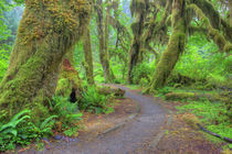 WA, Olympic National Park, Hoh Rain Forest by Danita Delimont