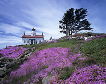 Crescent City, Battery Point lighthouse with ice plant in bloom by Danita Delimont