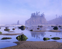 WA, Olympic National Park, Second Beach, tidepools and seastacks von Danita Delimont