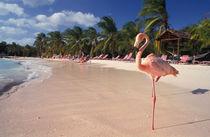 Caribbean, Aruba, Sonesta Island. von Danita Delimont