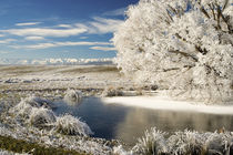 Frozen Pond and Hoar Frost on Willow Tree, near Omakau, and Hawkdun Ranges von Danita Delimont