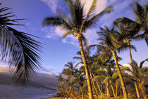 USA, Hawaii, Maui, Kihei Beach Evening light on beach and palms von Danita Delimont