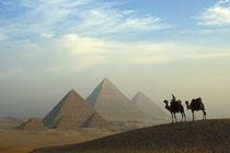 Egypt, Giza Camels, driver, Pyramids Complex Giza Plateau Desert by Danita Delimont
