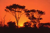 South Africa.  African sunset. von Danita Delimont