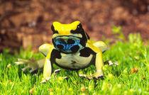 Dyeing Poison Frog Dendrobates tinctorius Native to Guyana, Surinam by Danita Delimont