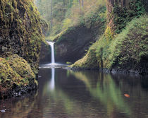 Punch Bowl Falls, Eagle Creek, Columbia River Gorge, Oregon by Danita Delimont