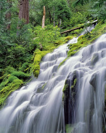 USA, Oregon, Proxy Falls by Danita Delimont