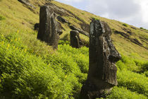 Moai by the quarry in the crater of Rano Raraku Volcano, Rapa Nui von Danita Delimont