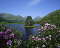 Glen Etive, Highlands, Scotland by Danita Delimont