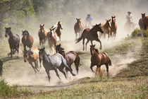 Horses running during roundup, Montana by Danita Delimont
