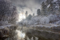 Hoarfrost along a slough at the Kelly Island FWP area along the Clark Fork River by Danita Delimont