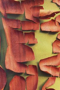 Madrona Trunk Detail, San Juan Island, WA by Danita Delimont