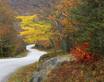 USA, Maine, Camden. Road leading through Camden Hills State Park. Credit as von Danita Delimont