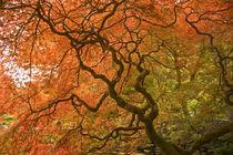 Japanese Garden, CANADA, British Columbia von Danita Delimont