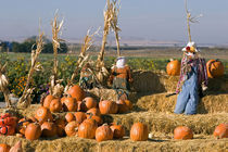 Pumpkin display with hay bales and scarecrows stand in Fruitland, Idaho by Danita Delimont