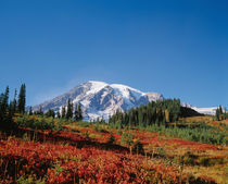 Fall colors in the schrubs at Paradise with Mt. Rainier in the background by Danita Delimont